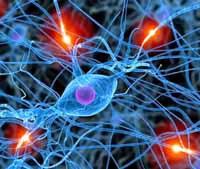 Neuronas activadas a tope